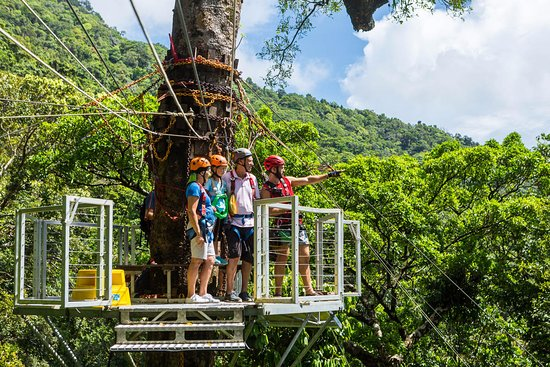Jungle Surfing Canopy Tours