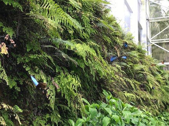 Fairchild Tropical Botanic Garden : photo8.jpg