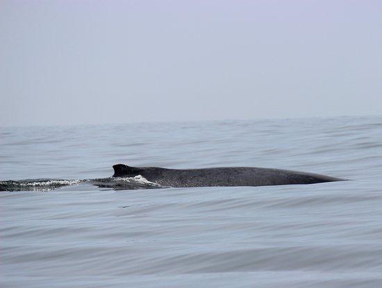 Ecotours de Mèxico: Whales