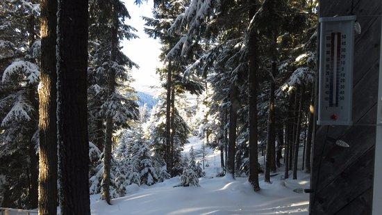 Prince George, Kanada: Cedar, hemlock, spruce, pine mixed forest trees