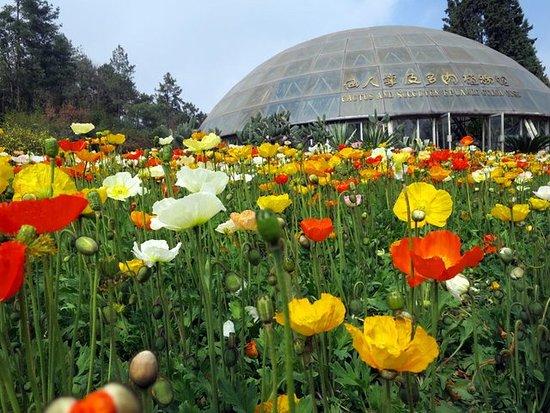 Jindian Park : colorful flowers