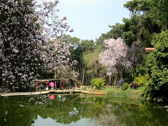 Jindian Park : small lakes surrounded by flowering trees