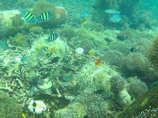 83+ Gambar Pemandangan Bawah Laut HD