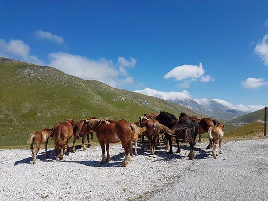 Assergi, Italie : cavalli liberi