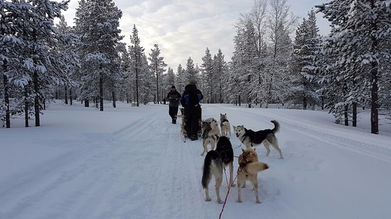 Kamisak Husky and Horse Expeditions - Day Tours: Our huskies team