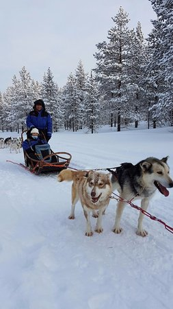 Kamisak Husky and Horse Expeditions - Day Tours: The strongest duo in our team