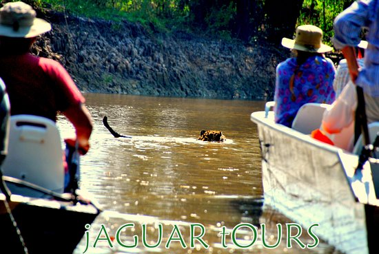 Gasparetour Pantanal Tours: Pantanal Jaguar Tour by Gasparetour
