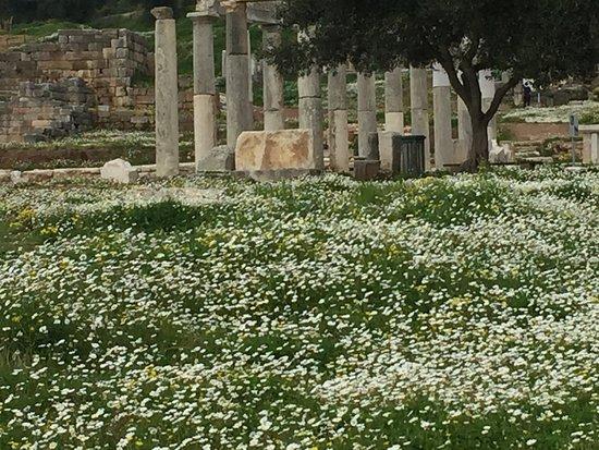 Ancient Messini : photo0.jpg