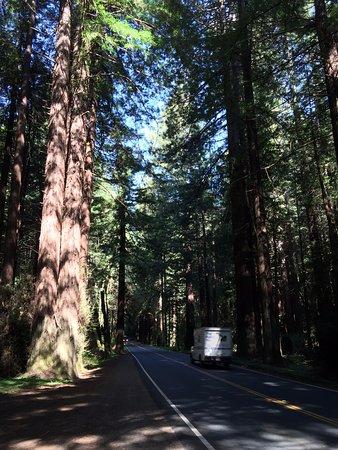 Elk, Καλιφόρνια: CA-128