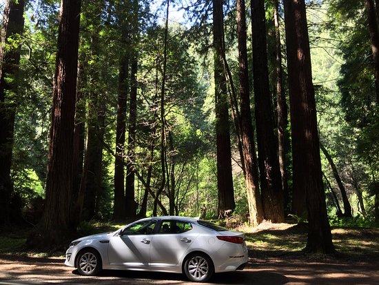Elk, Καλιφόρνια: Redwoods