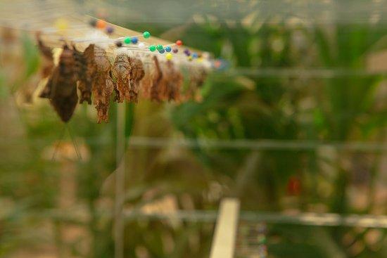 La casa delle farfalle modica italien omd men for Campionare le planimetrie della casa