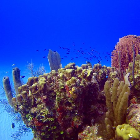 Off The Wall Dive Center & Resort: Healthy reef just a 2 minute boat ride away for some of the best diving in Belize
