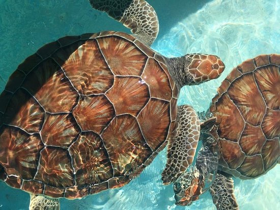Sea Turtle Hatchery照片