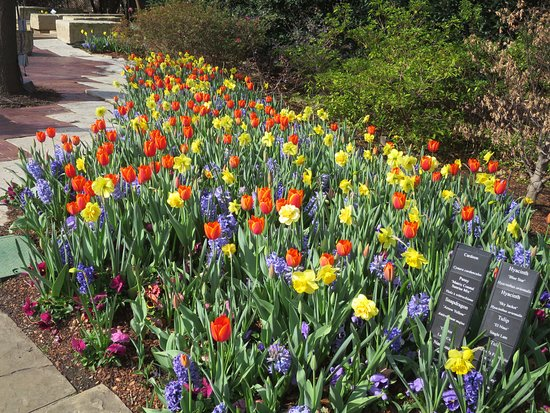 Flowers blooming everywhere! - Picture of Dallas Arboretum ...