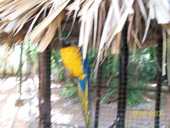 Hotel Coral Caribe: Una  hermosa guacamaya que esta cerca de la piscina