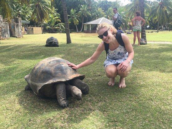 Isla Praslin, Seychelles: IMG_4899_large.jpg