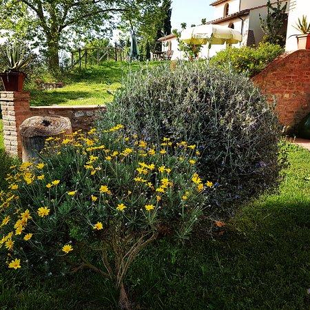 Podere Borgaruccio: vista giardino