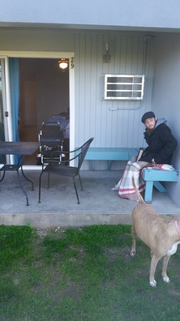 Ocean Villa Inn: Dog run area. See the wheelchair in the doorway, that's as far as we could get it.