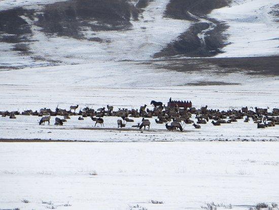 National Elk Refuge: photo1.jpg