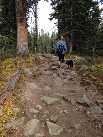 Ward, CO: forest uneven terrain, dog friendly