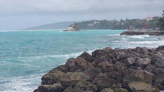 Sea Palms Photo