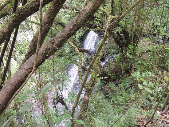 Owaka, Nya Zeeland: another view of the falls