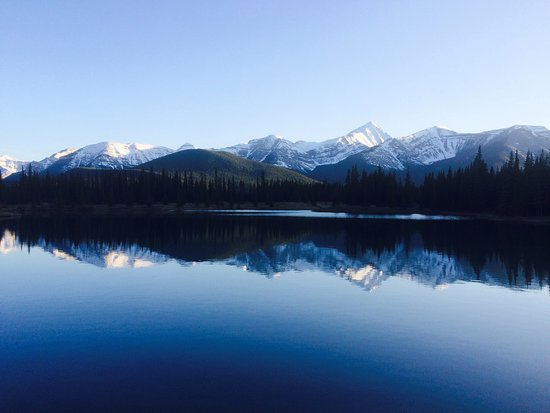 Bragg Creek, Canada: forget-me-not
