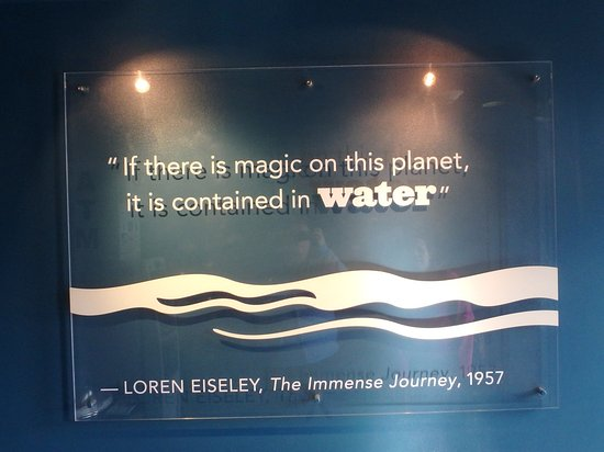 Inspirational Water Quote - Picture of New York Aquarium, Brooklyn