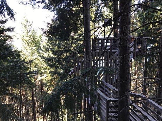 Ziptrek Ecotours: photo0.jpg