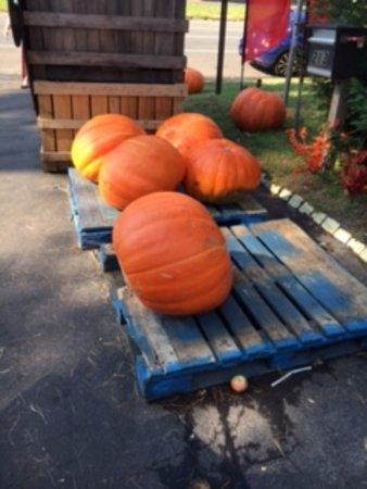 Jericho, نيويورك: Pumpkins