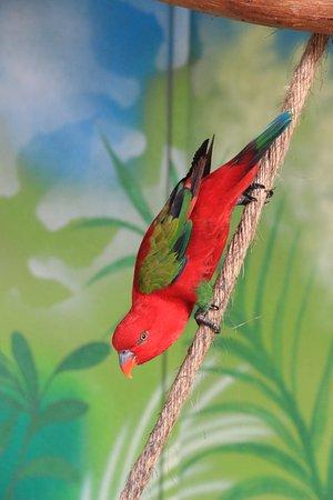 دافاو, الفلبين: hello there little birdie