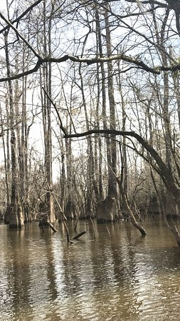 Pearl River Εικόνα