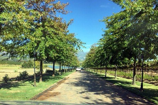 Asara Wine Estate & Hotel: The lovely lane leading from the main road to the estate