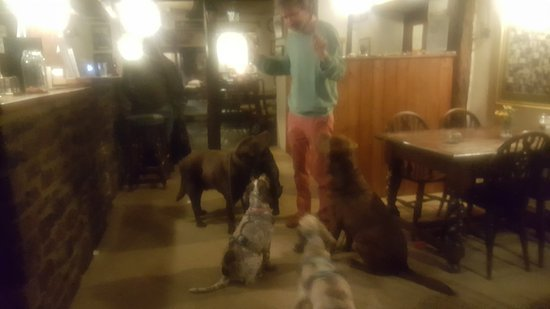 The Rising Sun Hotel : Jules is also a host to Canine visitors!!!!