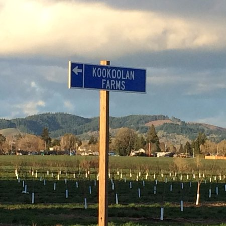 Yamhill, OR: Look for our blue signs on the highwway