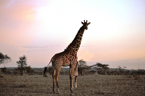 Elephants Of Serengeti National Park Picture Of Eyes On Africa - 9 things to see and do in serengeti national park