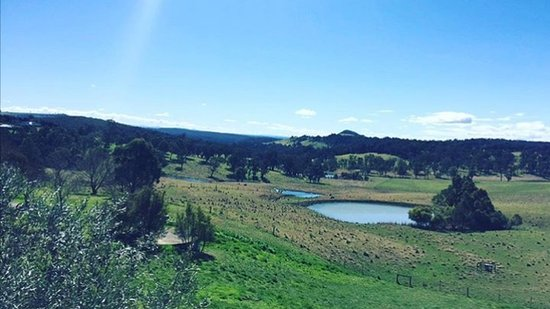 McVitty Grove Cafe & Restaurant: The incredible view