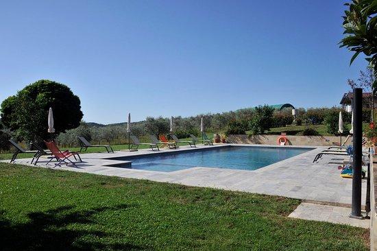 San Rocco a Pilli, Italia: piscina immersa nell'oliveta