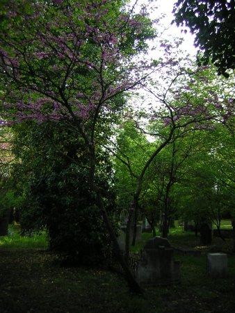 Cimitero Ebraico: Particolari del cimitero