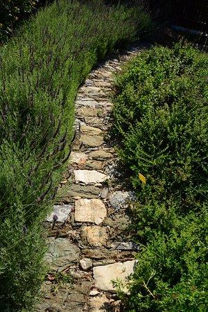 Amanita: herbs garden