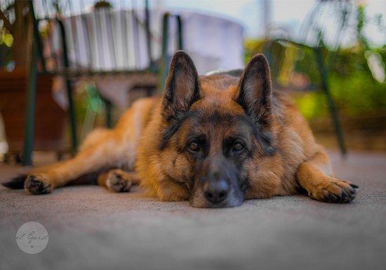 Landgasthof zur Linde: Gloria der Haushund