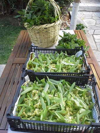 Amanita: herbs crop