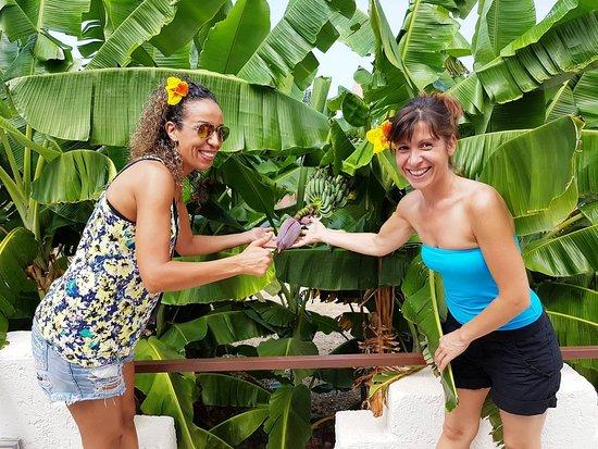 Real Banana Tree at Bali Resort Day Spa Tropical Garden.