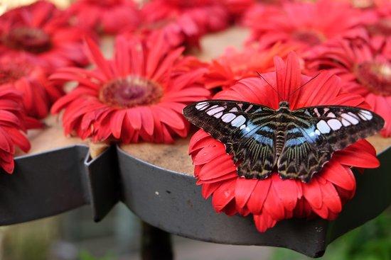 Butterfly Garden: Butterfly