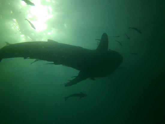 The Life Aquatic Photo