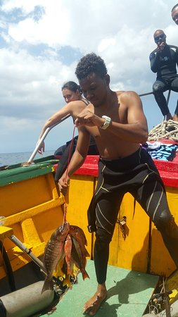 Negril Adventure Divers: Fish for tea :)