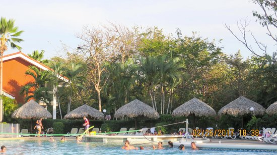 Occidental Tamarindo: resort pool with monkey in trees
