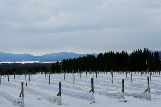 Brome, Kanada: Nice winter view of lake & mountains; Imagine fall