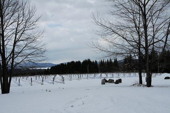 Brome, Canada: View
