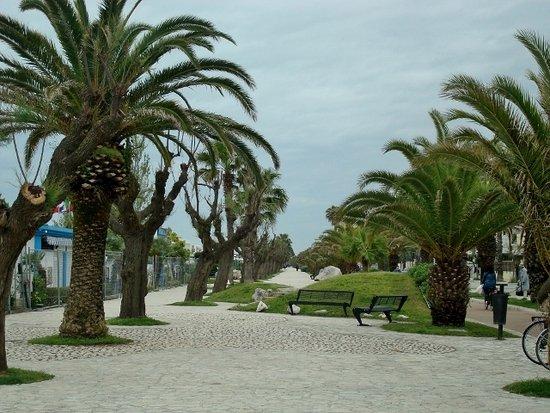 Riviera delle Palme: Palme in ogni dove...